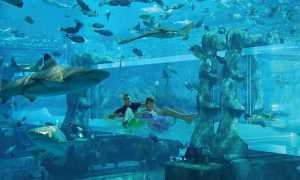Аквапарк Aquaventure в Atlantis the Palm Dubai