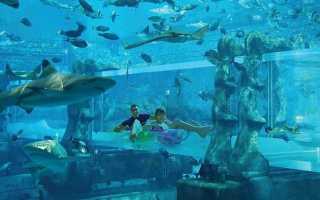 Аквапарк Aquaventure в Atlantis the Palm Dubai