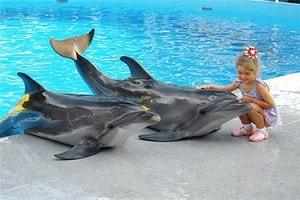 Дельфинарий Аквалэнд