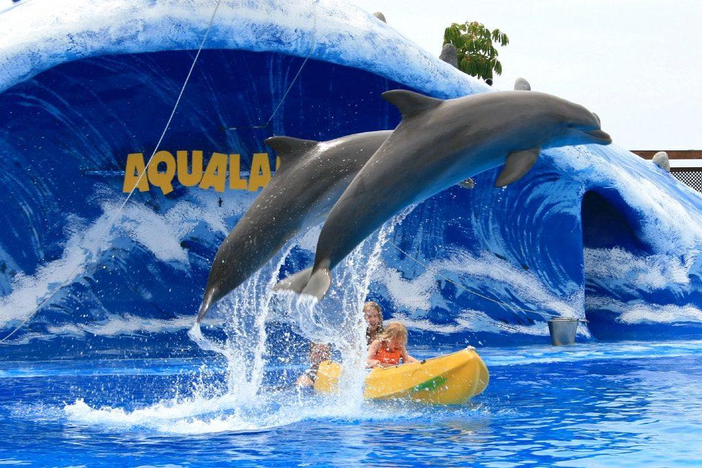 Дельфинарий1